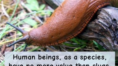 Humans Are Like Slugs